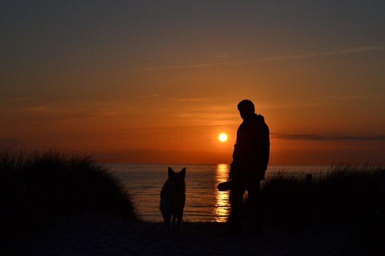 Frasi sui Cani: le più belle Citazioni di sempre