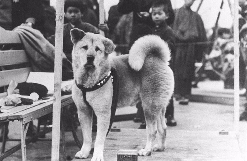 Hachiko: la storia del Cane che non ha mai smesso di aspettare il suo Padrone