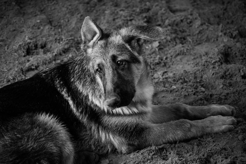 maltrattamento-cane-6-mesi-carcere-vignola