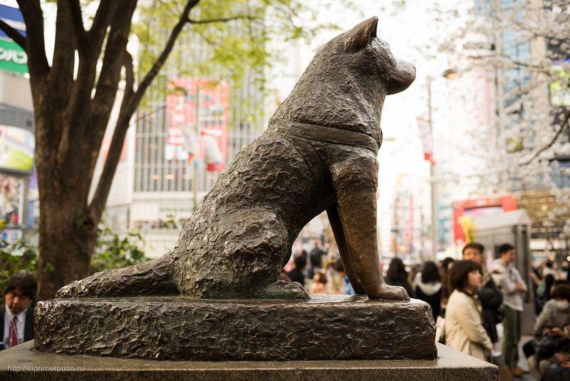 statua-hachiko
