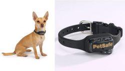 Cassazione: usare il collare anti-abbaio per il cane diventa reato