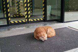 Il proprietario è ricoverato: il cane Leo lo aspetta per giorni davanti all'Ospedale
