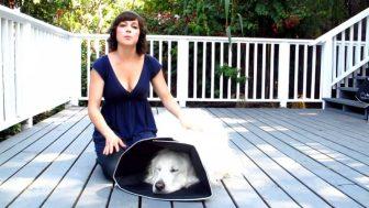 Collare Elisabettiano per il Cane: quando usarlo e quale scegliere