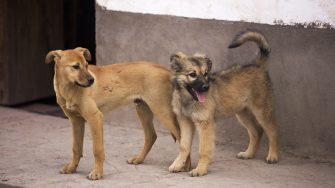 Russia 2018: migliaia di cani randagi condannati a morte PETIZIONE