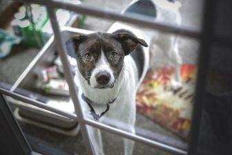 Bergamo: cane chiuso tutto il giorno in un box salvato dai vigili
