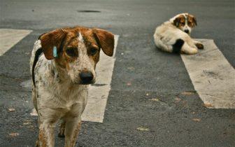 Marcocco: ennesimo sterminio di cani in vista dei Mondiali 2026