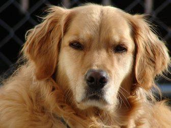 I cani nutrono rancore come gli umani?