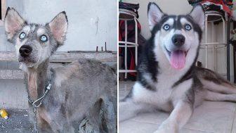 L'incredibile trasformazione di Hope, da cane morente a cane meraviglioso