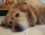 Lettera di un cane al suo umano poco prima di morire