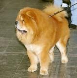 Errori comuni: tosare il cane quando fa caldo
