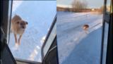 Il cane che aspetta il suo pasto alla fermata del bus