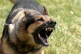 5 motivi per cui il cane sta abbaiando