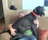 Il mio cane vuole stare sempre in braccio o addosso