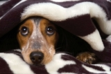Aiutare un cane fobico che ha paura di tutto