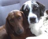 """La storia del """"cane che si rifiuta di essere adottato senza il suo compagno"""""""
