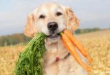 3 semplici consigli per allungare la vita del tuo cane