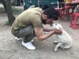 Cina: il rifugio italiano per i cani scampati al macello di Yulin