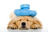 5 malattie che colpiscono l'uomo e il cane indistintamente