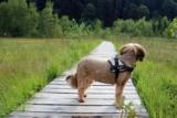 Decesso del cane: burocrazia e documenti