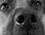 Perchè il mio cane ha il naso umido o secco? Sta bene?