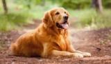 Come aiutare il cane nei cambiamenti di routine