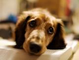 Cosa rischia chi maltratta un cane?