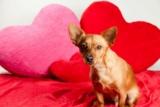 Programmi per San Valentino? Stare col Cane!