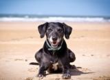 Una nuova spiaggia per cani ad Arenzano