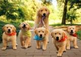 Sterilizzazione del cane femmina: tutto quello che devi sapere