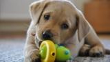 Strappare oggetti dalla bocca del cane