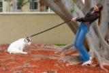 L'importanza di non strattonare il cane durante la passeggiata