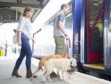 Viaggiare con il cane in treno