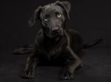 La sindrome del cane nero