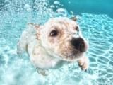 Underwater puppies – Cuccioli sott'acqua